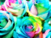 虹の薔薇2