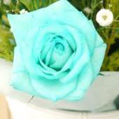 水色の薔薇1