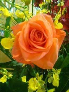 オレンジの薔薇_n